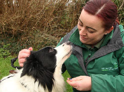 Want to be part of our volunteering team?