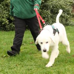 Reunion Walk – Saturday 15 June at Antrim Castle Gardens