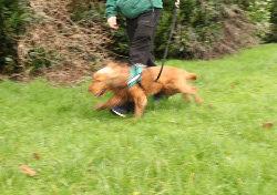 Annual Sponsored Dog Walk – Wednesday 26 June