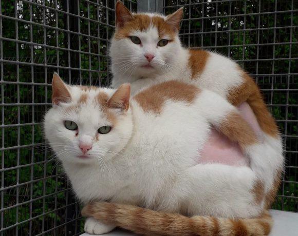 Ginny & Gloria