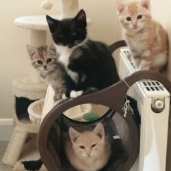 Craig,Chester,Aubrey,Amara